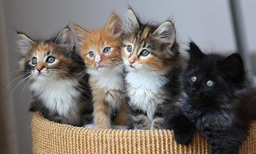 Pétition : Des chattes et des chatons errants en détresse !