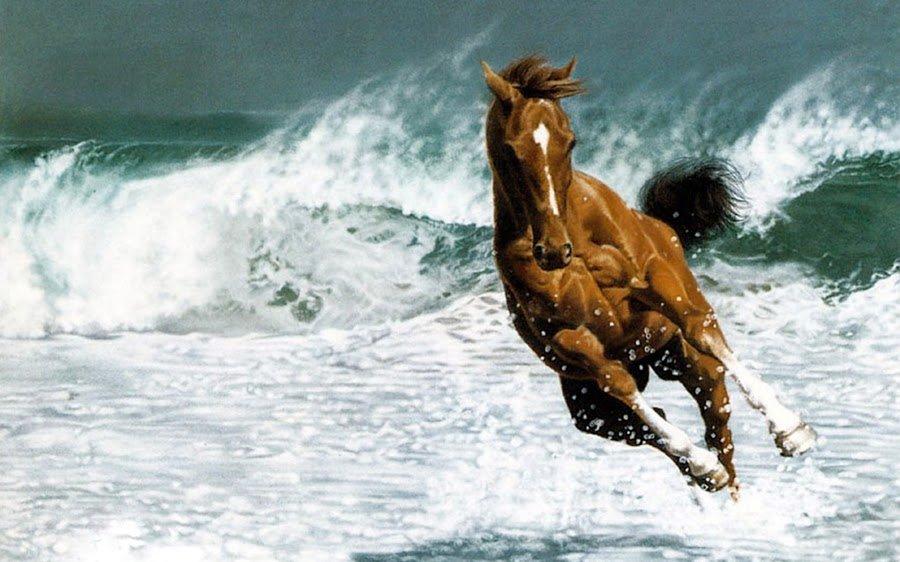 Beautiful Animals - SchoolandUniversity's Photography