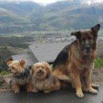Soutenez les propriétaires de chiens mécontents. | Facebook