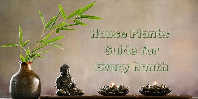 Tips for choosing your House Plants of the Month