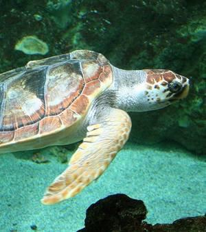 Les tortues de mer sont en danger à cause des déchets lumineux !