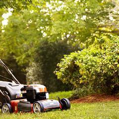 Maladie de Lyme: aménager son jardin pour se protéger des piqûres de tiques