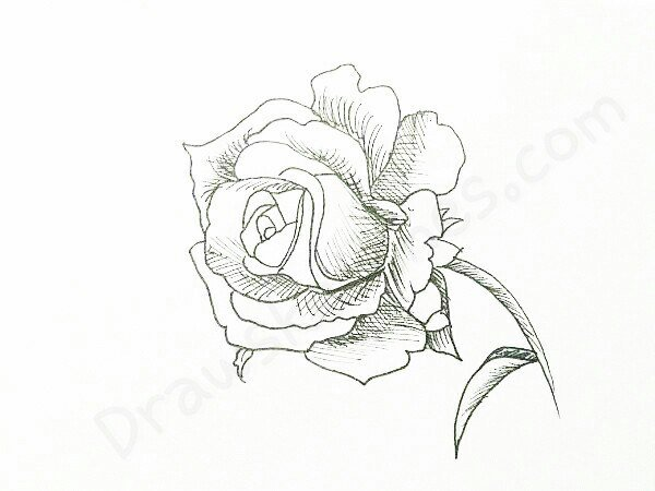 How to Draw A Rose: In 16 Easy And Detailed Steps with (Pictures)