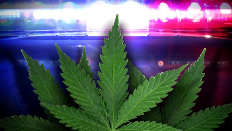 Drug dealers used Ford Fusions to import $1 million marijuana in U.S.