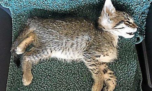 Pétition : Que la vérité éclate : qui a empoisonné plus de 400 chats à Saint-Pierre-la-Mer