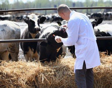 Animaux sous antibiotiques : quels sont les risques pour nous ?