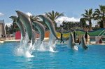 Marineland Dauphin - Blog de morgane-fxxck83