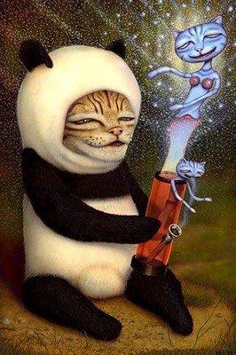 Panda cat Dub - 13Joule