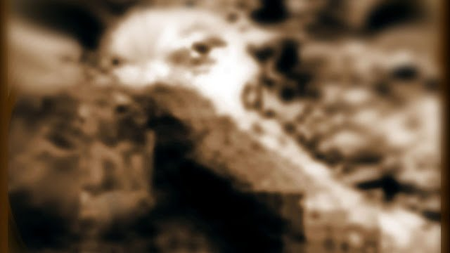 Martians Observing The Alien Vehicle From Earth | Mars Alive