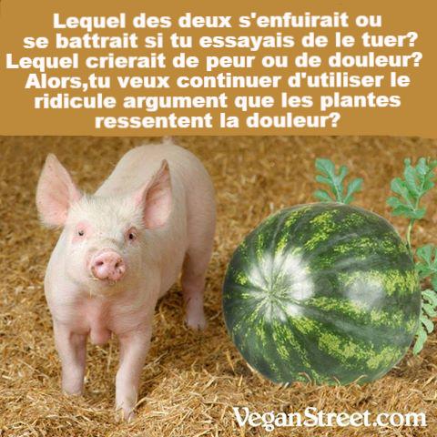 Cri de la carotte | VEGAN FRANCE | Annuaire végane francophone.