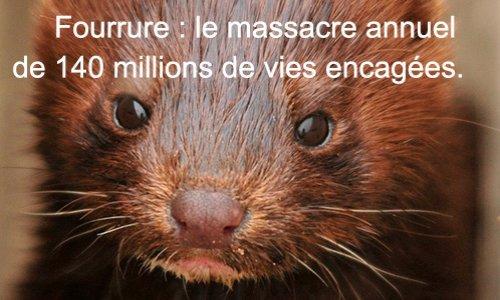 Pétition : Pour un projet de loi interdisant l'élevage d'animaux à fourrure en France.