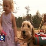 Un chien d'accompagnement aide une petite fille de 3 ans àvivre