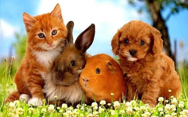 La Ferme des Animaux : Animalerie en ligne