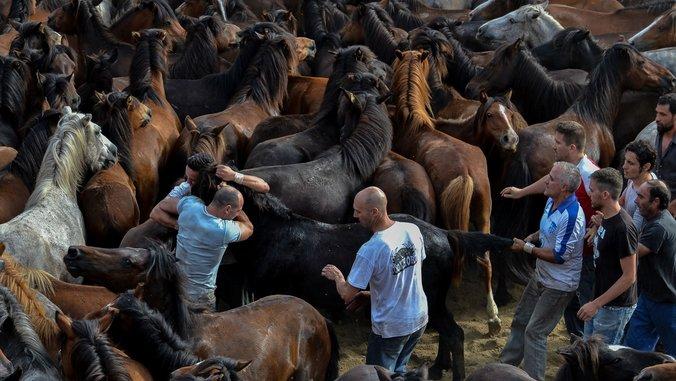 Encore une tradition cruelle en Espagne - Fondation 30 Millions d'Amis