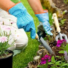 Prévenir les divers risques du jardinage : conseils de Santé Canada