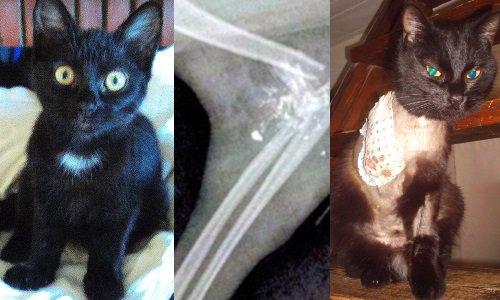 Pétition : Justice pour Diana et les chats de Chapeiry