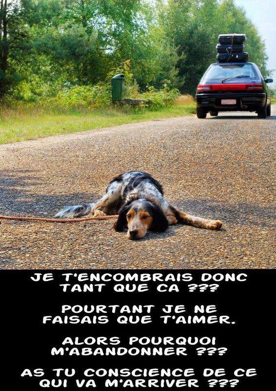 NON À L'ABANDON !!!