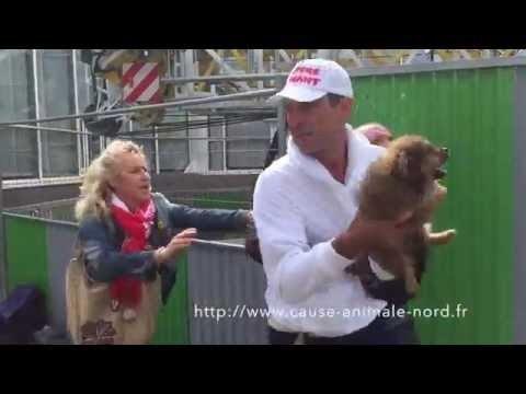 Mon avis sur la vidéo du SDF qui s'est fait voler son chien par Cause Animale Nord