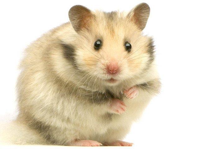 hamsterfan  fête ses 46 ans demain, pense à lui offrir un cadeau.Aujourd'hui à 09:16