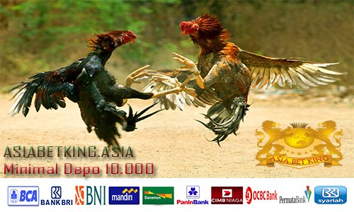 Daftar Agen Main Taruhan Judi Sabung Ayam Online Terbesar