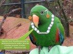 le blog d'un ami à découvrir! Pour tous ceux qui aiment les animaux et surtout les fans de Pairi Daiza