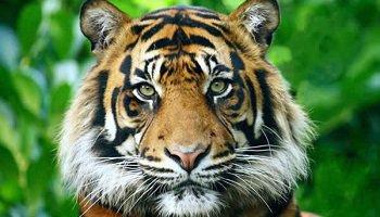 Pétition : Interdisons l'exploitation lucrative d'animaux sauvages dans les cirques en France !