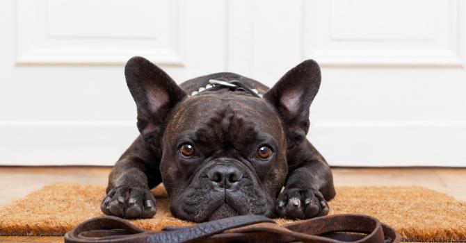 Les dix races de chiens préférées des Français