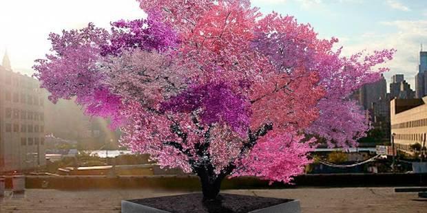 Cet arbre étonnant produit 40 variétés différentes de fruits