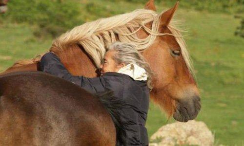 Pétition : Pour sauver l'un des derniers troupeaux de chevaux semi-sauvages de France !