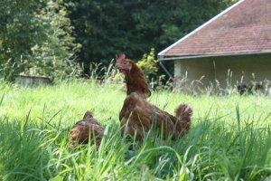 S'informer pour agir : Protégeons les animaux de ferme