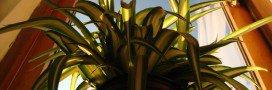 Les plantes qui purifient notre air