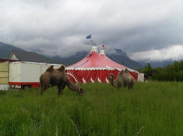 CIRQUE WILLIAM DUMAS - CIRQUE WILLIAM DUMAS - CIRQUE HEROS : le blog du cirque