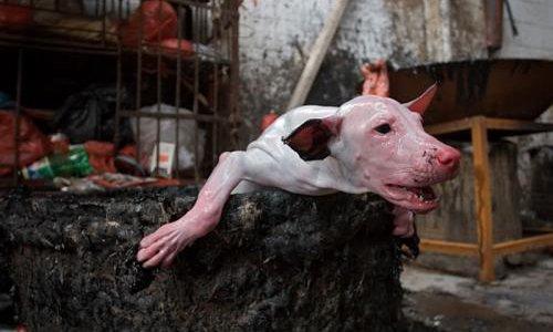 Pétition : Tous unis pour chaîne mondiale contre le génocide animal !