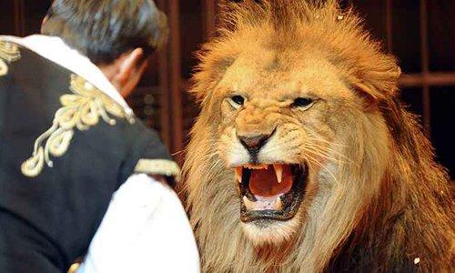 Pétition : Non aux cirques utilisant des animaux