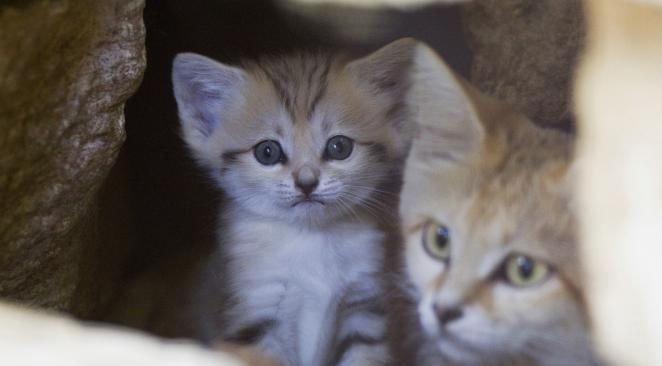 New York : deux chatons perturbent le fonctionnement du métro