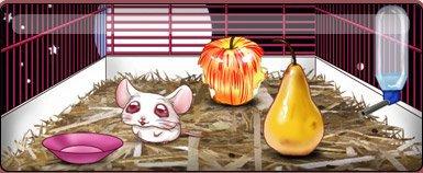Cromimi, jeu de souris, jeu de hamsters, jeu de furets. Elevage de cromimis - Cromimi.com