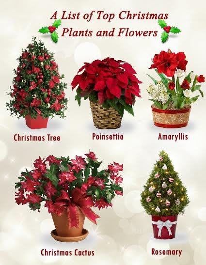Unique Christmas Plants and Flowers