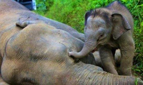 Pétition : Monsieur Trump, vous cautionnez le massacre des éléphants !