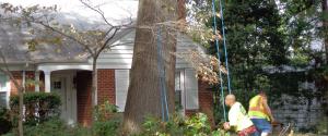 Tree Service Removal Company   Fairfax Tree Removal   Tree Care Fairfax VA - Tree Service Removal Company Fairfax