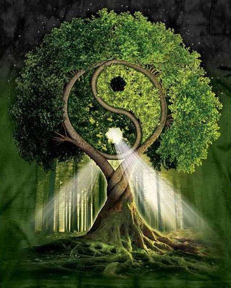 Respecter l'environnement !