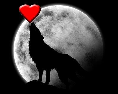 Un loup marche des milliers de kilomètres pour trouver l'amour....................