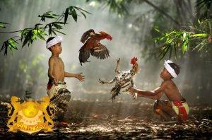 Situs Bandar Taruhan Sabung Ayam Online SV388 Terbesar