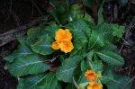 Fleurs jaunes - Tite Laety et ses photos magnifiques ;-)