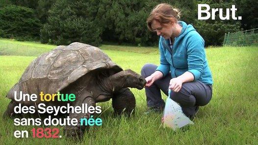 A 185 ans, Jonathan la tortue est probablement le plus vieil animal encore en vie - vidéo Dailymotion