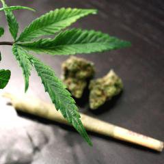 Avec la Californie, la légalisation du cannabis récréatif touche désormais 20% de la population américaine