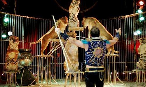 Pétition : Le cirque de Venise de nouveau à Sète : empêchons-le !