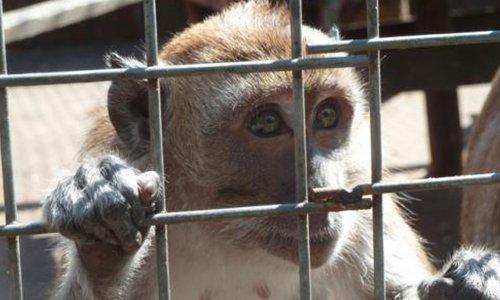 Pétition : Demande en justice pour le massacre des singes de Labenne