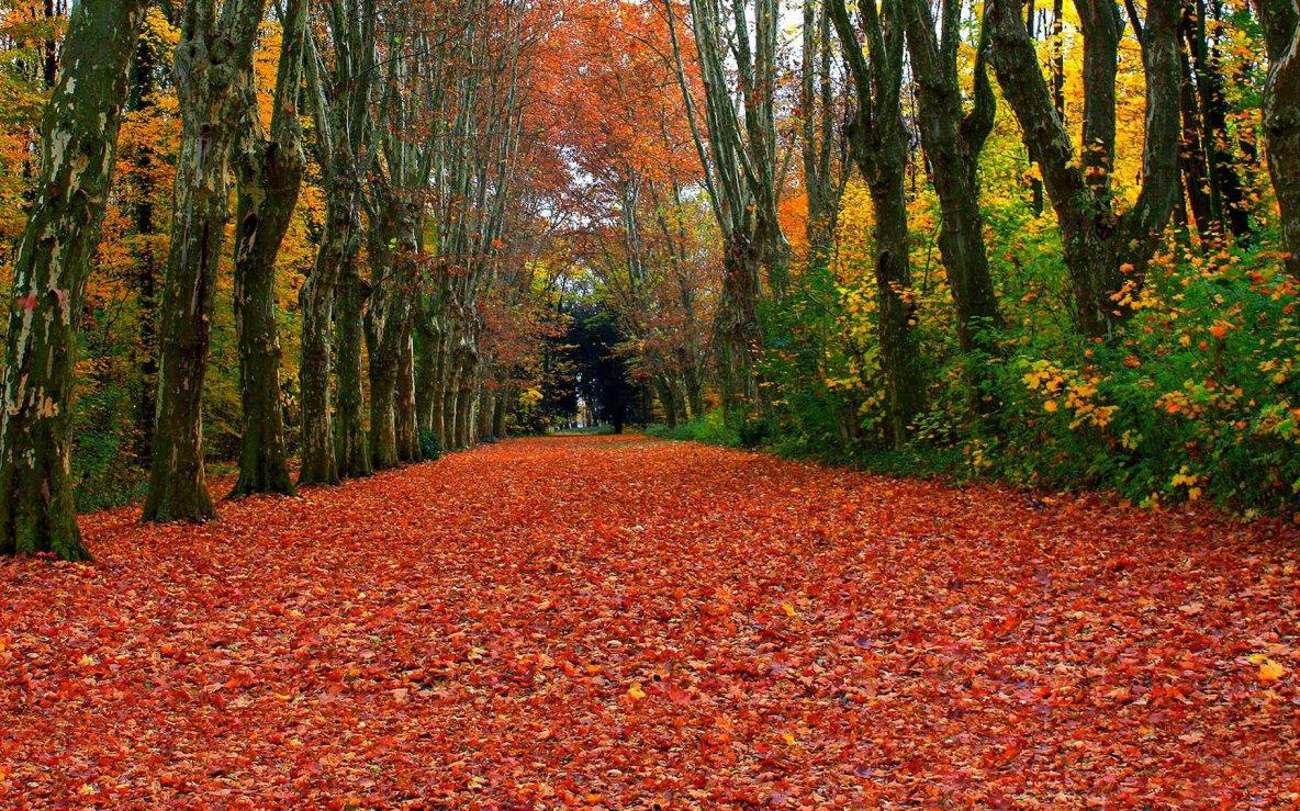 Automne : saison des arbres aux feuilles flamboyantes | Dossier