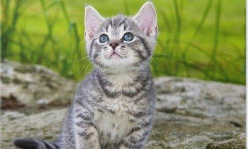 Pétition : Peine de prison ferme pour l'individu ayant assassiné un chat dans un jardin public à Limoges