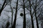 Forêt - Tite Laety et ses photos magnifiques ;-)